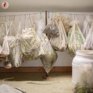 Ferme de Kokopelli - Récoltes, Séchage