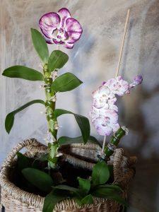 Tuteurs déco Orchidées